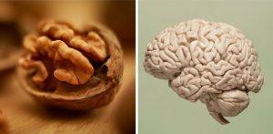 Как потребление орехов влияет на здоровье и функции головного мозга